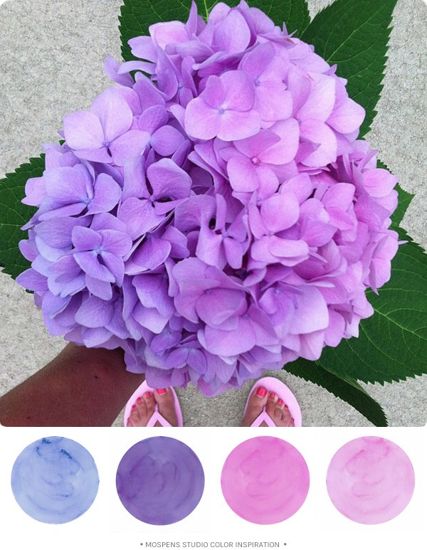 Hydrangea flower color inspiration \ MospensStudio.com